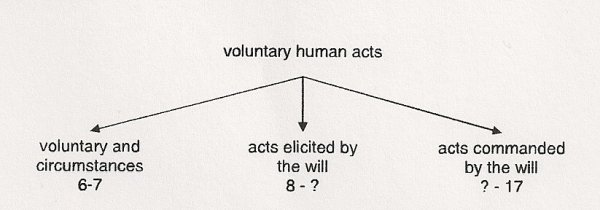 meaning of the voluntary